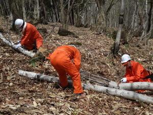 長野県志賀高原「バンダイナムコの森」で2014年春の保全活動を実施
