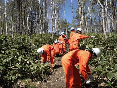 """Forest Management Activities in Spring 2013 at """"Forest of BANDAI NAMCO"""" in Shiga Kogen, Nagano Prefecture"""
