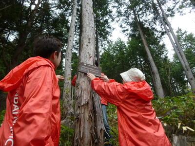 長野県志賀高原「バンダイナムコの森」で保全活動を実施しました。
