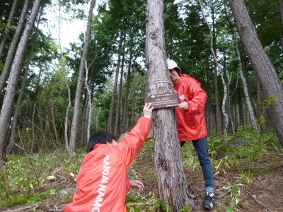 Conservation activities at BANDAI NAMCO Forest in Shiga Kogen